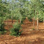 [Guía] Escenografía Birmana (I): Árboles
